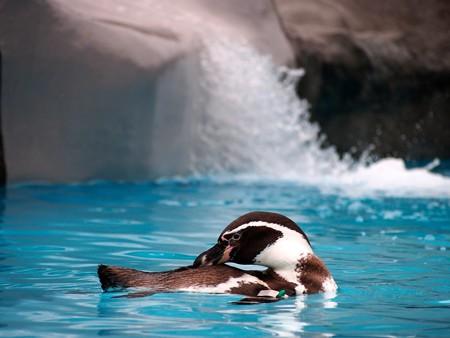20121222 日本平 ペンギンプール06