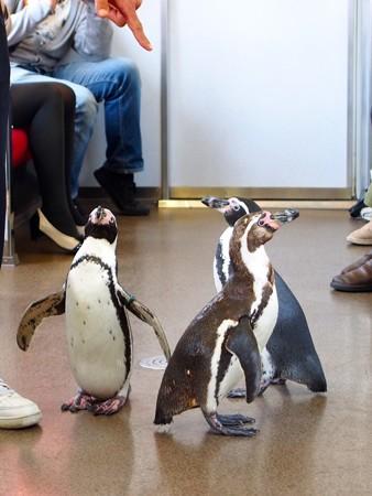 20130413 志摩 ペンギン列車18