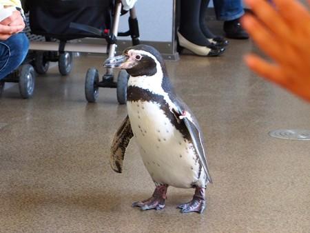 20130413 志摩 ペンギン列車13