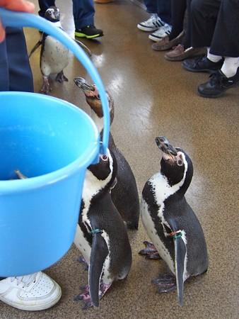 20130413 志摩 ペンギン列車10
