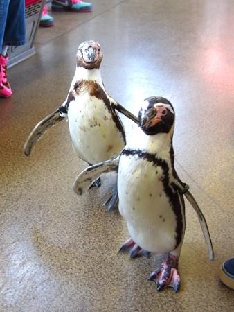 20130413 志摩 ペンギン列車31