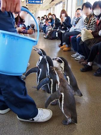 20130413 志摩 ペンギン列車28