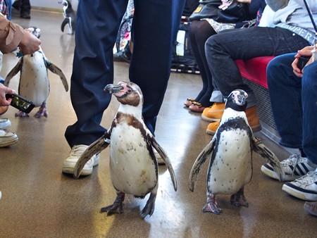 20130413 志摩 ペンギン列車25