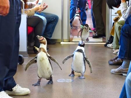 20130413 志摩 ペンギン列車24