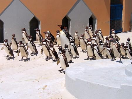 20130413 志摩 ペンギンランド14
