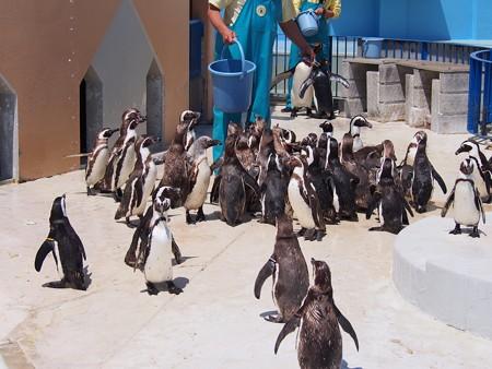 20130413 志摩 ペンギンランチ08