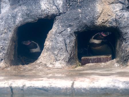 20130414 鳥羽 よりぬきペンギン08