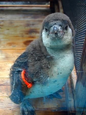 20130414 鳥羽 よりぬきペンギン02