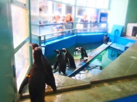 20130414 二見 ペンギン舎05