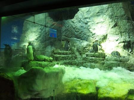 20130905 海遊館 ジェンヒナ03
