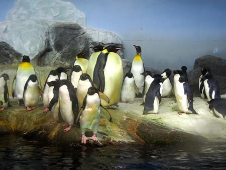 20131206 アドベン 南極水槽02