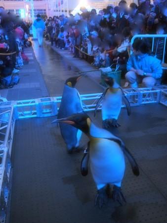 20131208 海遊館 イルミキング04