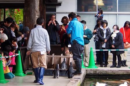 20131208 神戸 パレード14