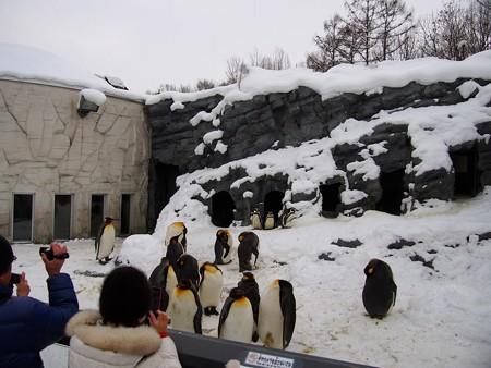20140124 旭山 ペンギン館02