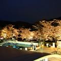 写真: 20140405 京都Z 桜のペンギンプール02