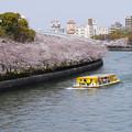 写真: 春のうららの♪