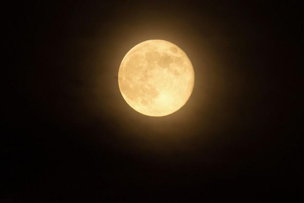 山吹色の十六夜満月
