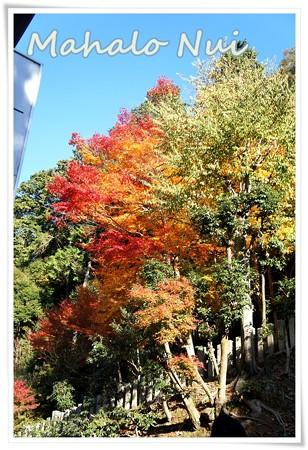日本のラスタカラー紅葉