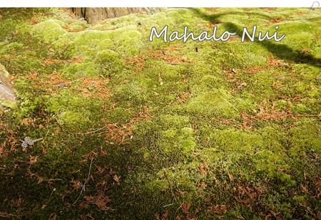 びっしりの苔