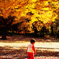 写真: 落ち葉踏む音