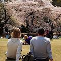 Photos: Ohanami