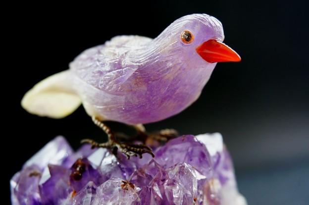 写真: 飛べない鳥