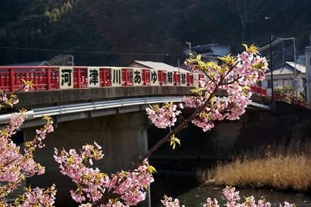河津桜と橋