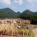 写真: 四谷千枚田と軽トラ