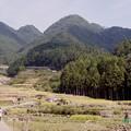 写真: 棚田の稲刈り