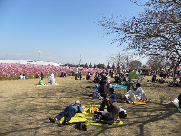 桜の日陰で