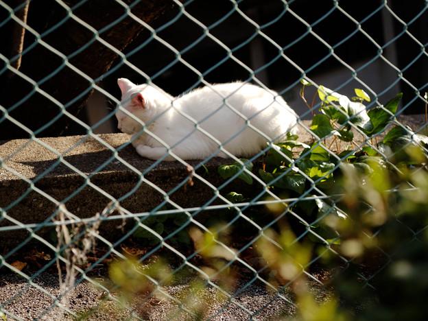 猫とフェンス