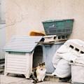Photos: 猫小屋