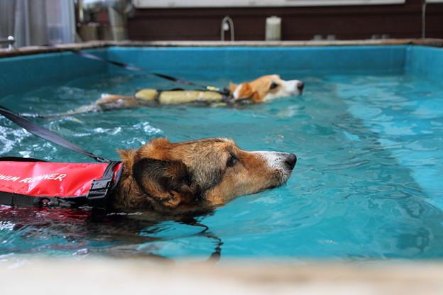 もくもくと泳ぎます。