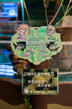shinyashima120804007
