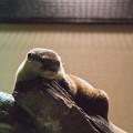Photos: miyajima121002134