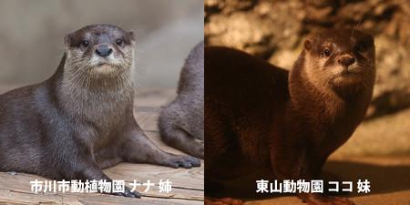nana_koko_hikaku