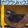 Photos: hamamatsu130101140