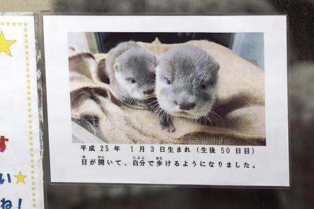 hirakawa130303001