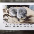 写真: hirakawa130303001