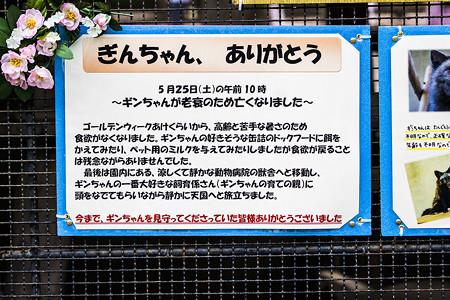 ichikawa130609002