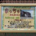 Photos: tobuzoo130707004