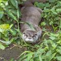 写真: zoorasia130804056