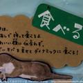写真: tokuyama130916001