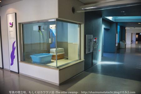 miyajima130917001