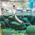 写真: zoorasia131020098
