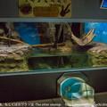 Photos: otaru1401020003