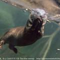 Photos: maruyama1401010906