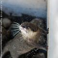 Photos: nannpara140322476