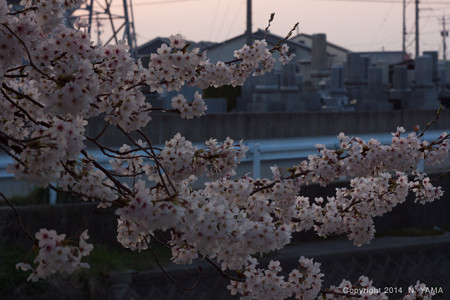 flowers_120