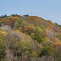 写真: 春 紅 葉